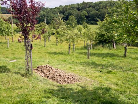 קבורה ירוקה